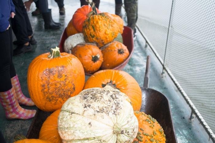 Pumpkin patch_8